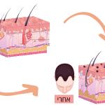 הדמית שיער התהליך והחסרונות